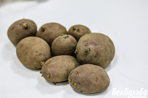 сорт-картофеля-с-ростками