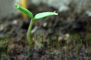 Минеральные удобрения и урожайность