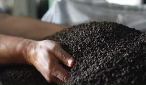 Роль-органо-минеральных-удобрений-в-стабилизации-гумуса