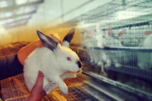 Отсадка крольчат. Работа по доращиванию молодняка
