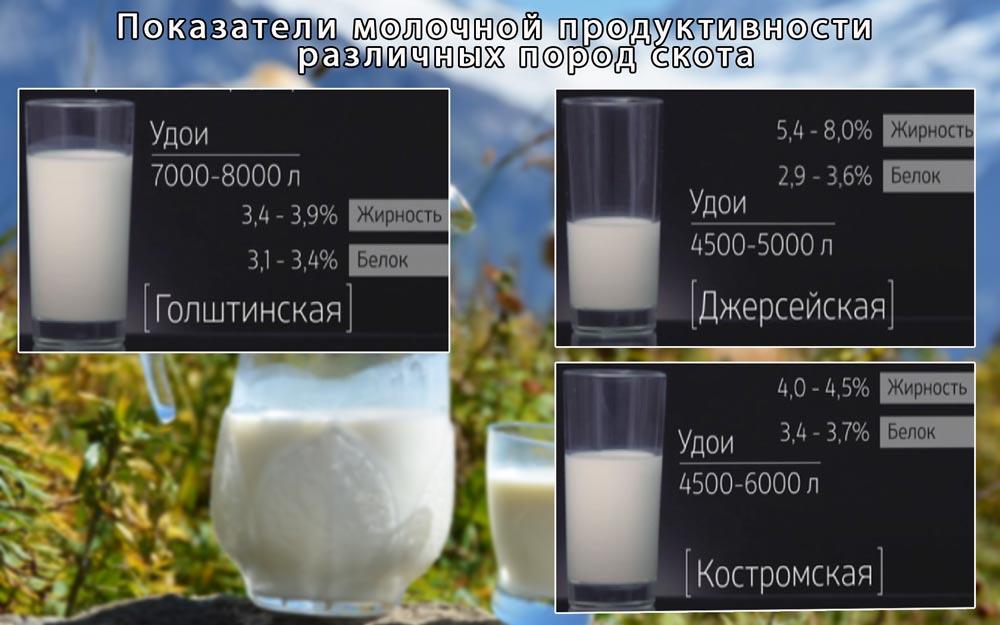 молочная-продуктивность-различных-пород-скота