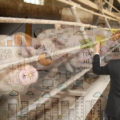 Бизнес-планирование в свиноводстве
